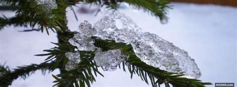 christmas tree and snow Photo Facebook Cover